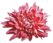 ChBall14_Flower